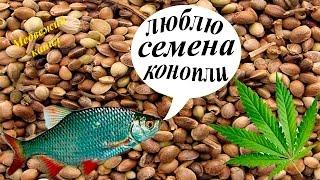 видео Активаторы клева для карпа купить - искусственная приманка для рыбы черви