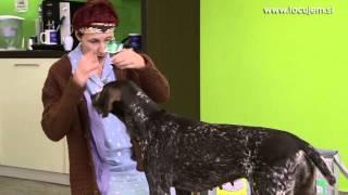 Locujem, Zemljo varujem Fata in pes (1. epizoda)