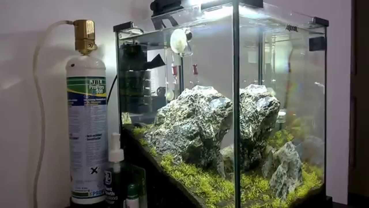 Iwagumi Aquael Shrimp Set 30 Shrimp Aquascape Day 4 Youtube