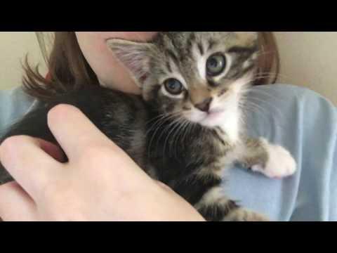Kitten Spits at His Camera Reflection!!! Kitten Cuddles :)