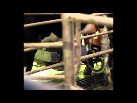 The problem with the robot milking