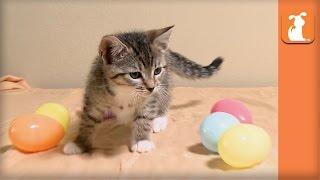 Fluffy Kitten Has Easter Egg Hunt - Kitten Love