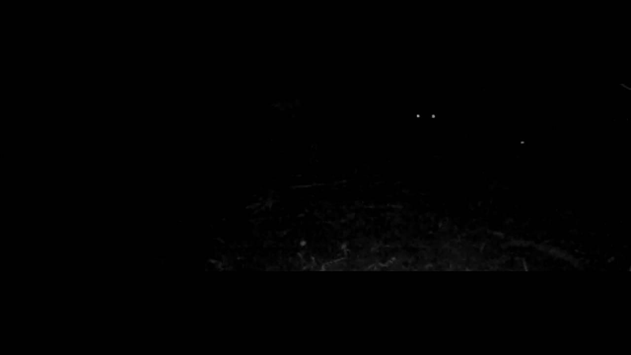 Sangliers des yeux dans la nuit youtube - Bruit dans les combles la nuit ...
