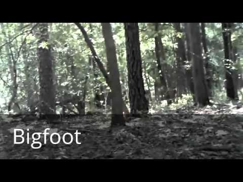 Bigfoot Sighting in South Jersey