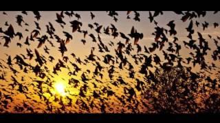 Аномалии природы .Ночь падающих птиц. Индия