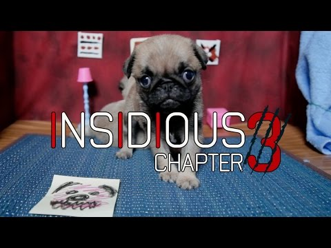Insidious: Chapter 3 (Cute Pug Puppy Edition)