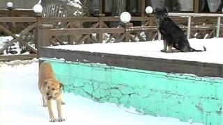 Житомирян кусають собаки   Житомир