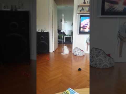 Lucky the Boy(kitten) 4 months old cat