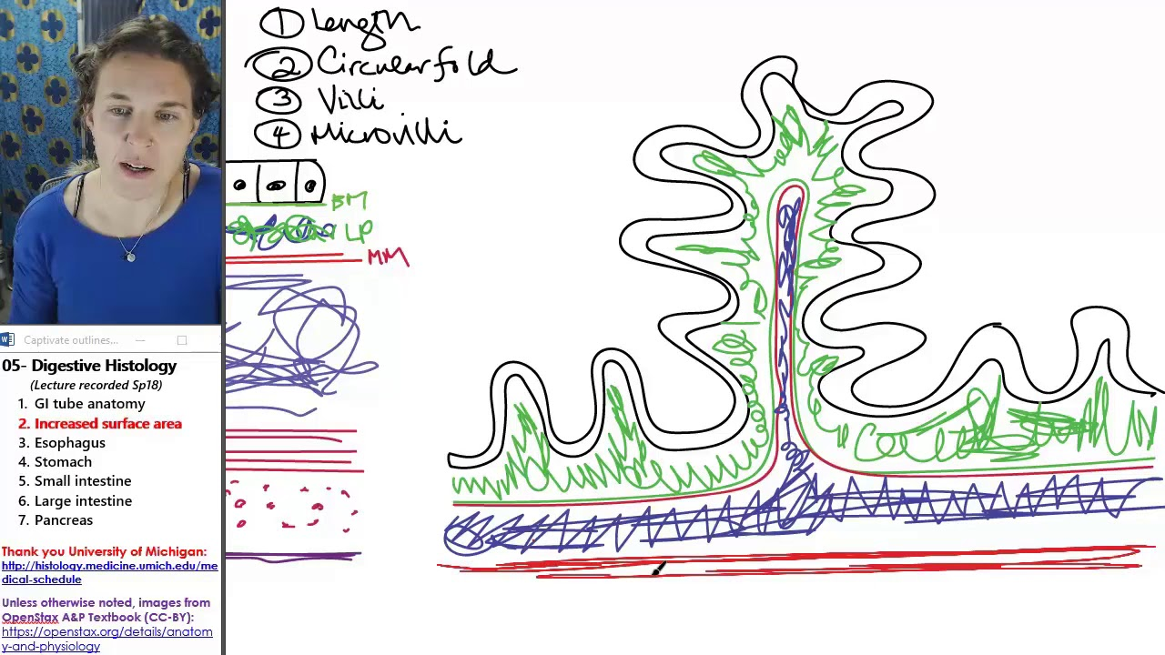 Digestive histology 2- Increased surface area - YouTube