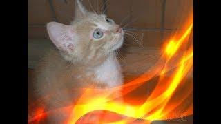 Позитив Прикольные кошки и котята Создай себе хорошее настроение