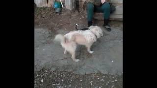 Игра собак Джей ника