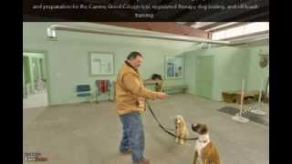 Canine College | Holbrook, Ma | Dog Training