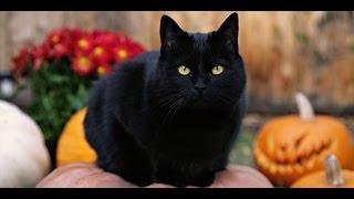 "Скрытая камера ""Черная кошка""."