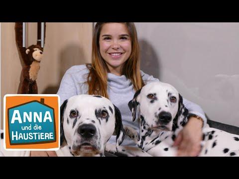 Dalmatiner   Reportage für Kinder   Anna und die Haustiere