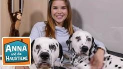 Dalmatiner | Information für Kinder | Anna und die Haustiere