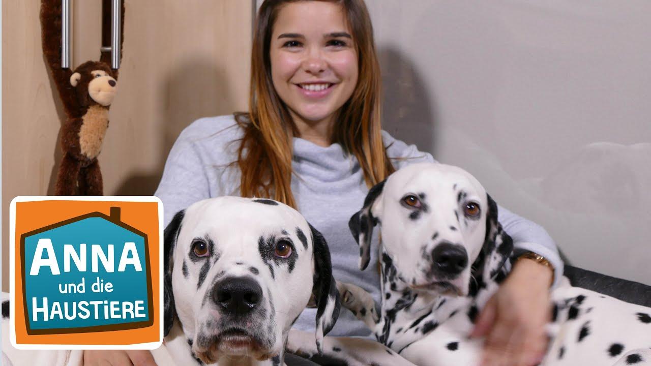 Dalmatiner Information Fur Kinder Anna Und Die Haustiere Youtube