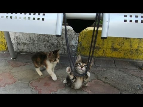 Cute kittens playing with rope of my bag