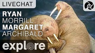 Walrus Live Chat with Ryan Morrill and Margaret Archibald thumbnail
