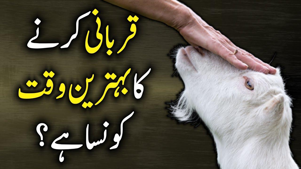 Eid Ul Adha - Qurbani Ka Behtreen Waqt Konsa Hai?