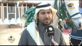 الجنادرية .. مهرجان التراث والثقافة يتزين بعروض الخيل والأصالة