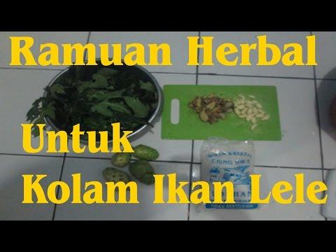 Ramuan Herbal Untuk Kolam Ikan Lele (Herb For Catfish)
