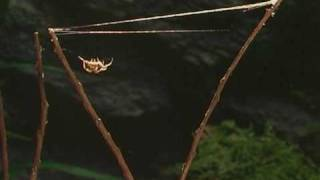 Spiders - Natural History 1