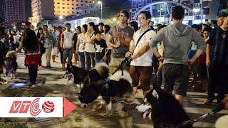 Chó nghìn đô, mối hoạ của người nuôi? | VTC