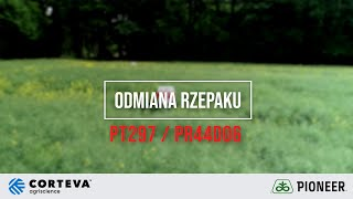 Demo Farma w Rogowie - Porównanie odmian marki Pioneer PT297 i PR44D06 rzepaku ozimego