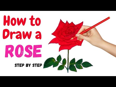 how to draw a rose 2021 | drawing ideas  - Only Drawing