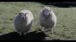 Video Black Sheep download MP3, 3GP, MP4, WEBM, AVI, FLV November 2017