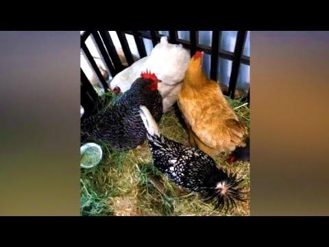 Thalía con sus hijos Sabrina y Matthew en una granja (redes sociales 25 de mayo 2017)