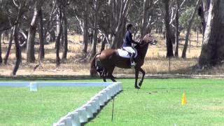 horse does harlem shake