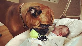 Donijeli su bebu kući, a njihov pas joj je spremio POKLON koji je raznježio cijelu porodicu !
