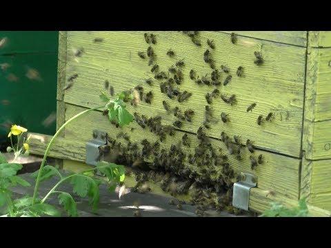 Сколько же воды надо пчелам