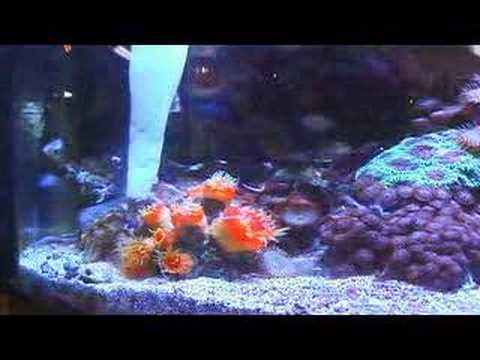 Saltwater Fish Tanks How To Take Care Of A Saltwater