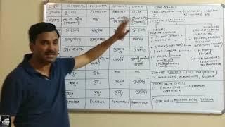 Phylum Protozoa (Animal Kingdom) Hindi Medium