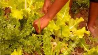Organic Farming in Taleigao, Goa