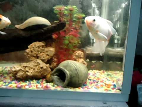 Mi acuario de 90 litros avi youtube for Acuario 90 litros