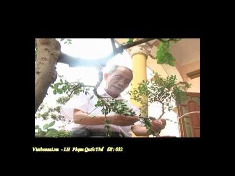 Vietbonsai.vn: Kỹ thuật tạo kiểu cành cây cảnh - P1