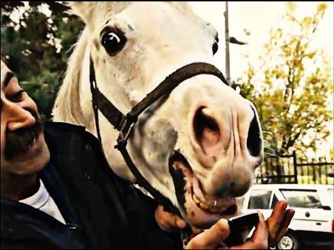 Düzenbaz Tırınını At Yarışı İşine Girdi | Full Sıyrıl Da Gel Sinan | 145. Bölüm
