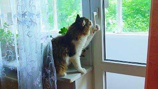 О дайте дайте мне свободу!!!! Смешной и Очень умный кот!!!