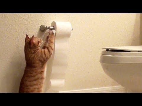 Toilet Paper Killer!!