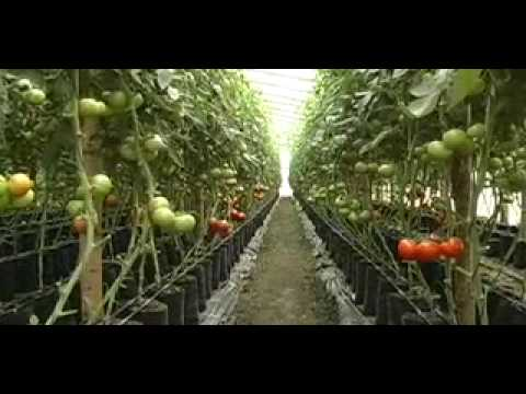 GREENHOUSE: The Benefits of Greenhouses