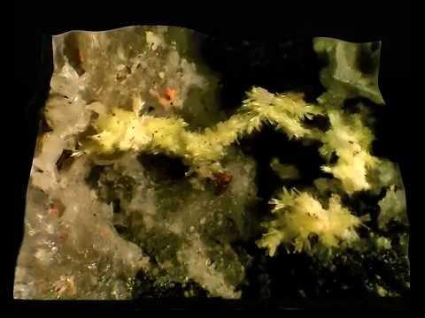 STEWARTITE 3D  MESQUITELA   MAGUALDE   distretto di VISEU   PORTOGALLO   campo 1,5 mm  enhanced