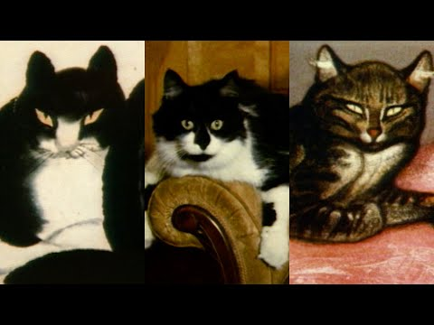 Metropolitan Cats, 1983—A History Of Cats At The Met | From The Vaults