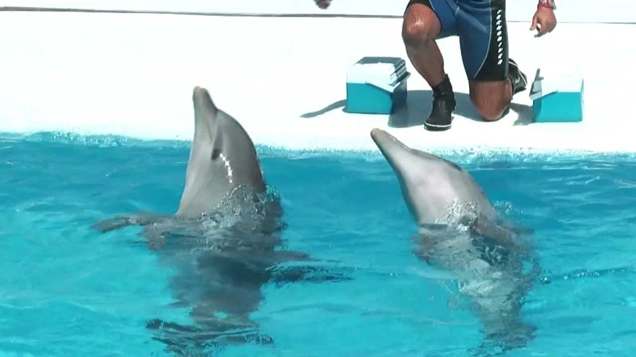 Delfin Show 4