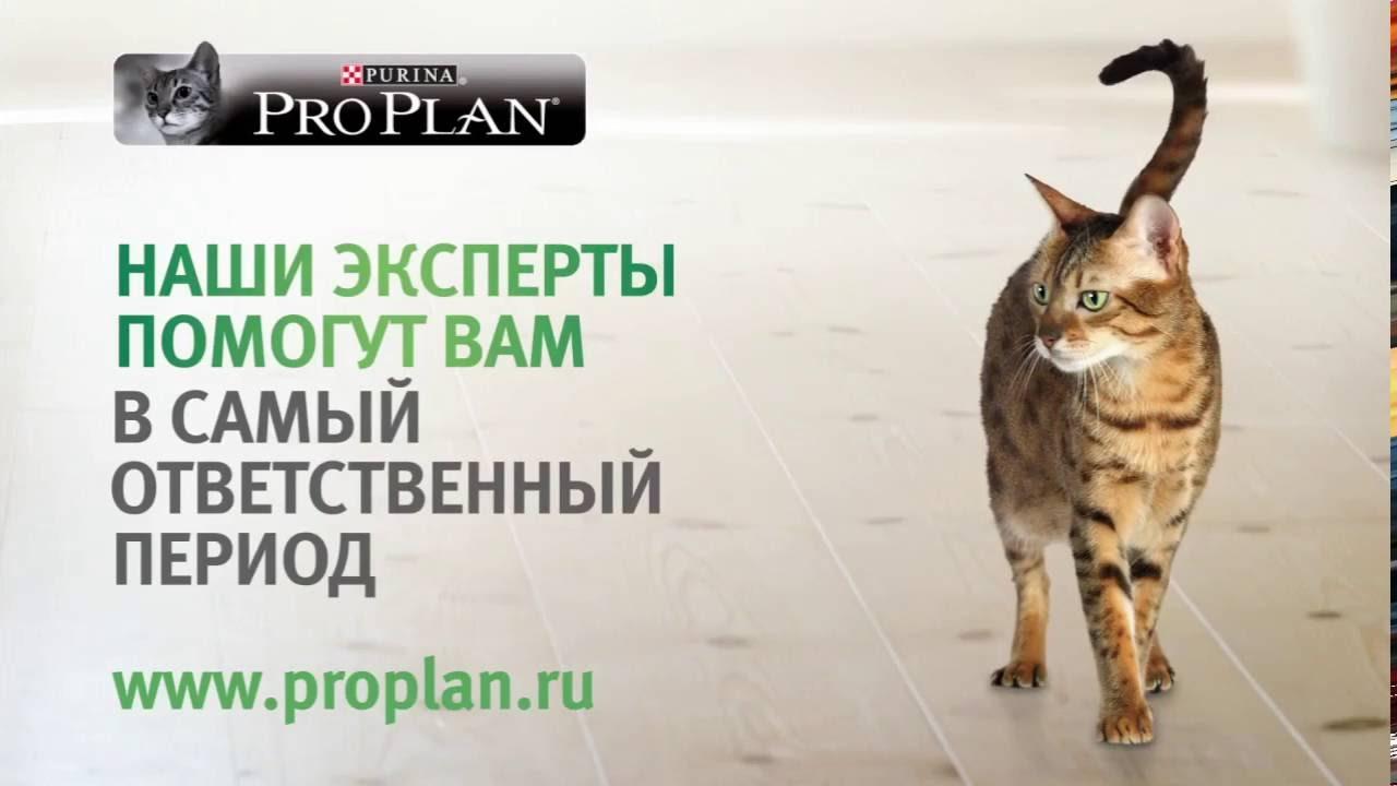 Доставка корма Бош по Украине - Zook.com.ua - YouTube
