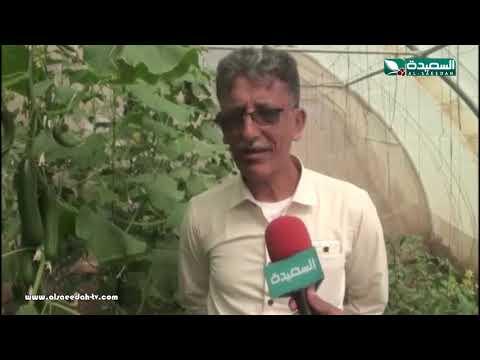تقرير : إنتشار البيوت الزراعية البلاستيكية في إب (3-4-2019)