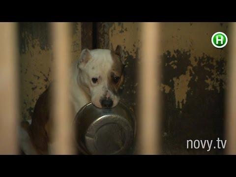 Как измываются над собаками в приютах для бездомных животных? - Абзац! -  16.11.2015
