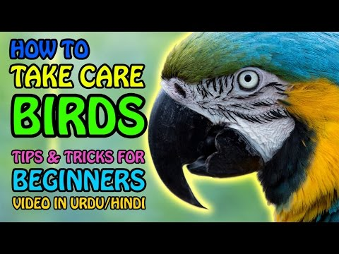 How to take care of birds   Parrot Care   Tips & Tricks for Beginners   Video in Urdu/Hindi